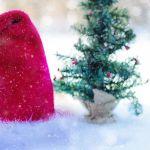 7. Dezember 2018: HSV- Generalversammlung und -Weihnachtsfeier